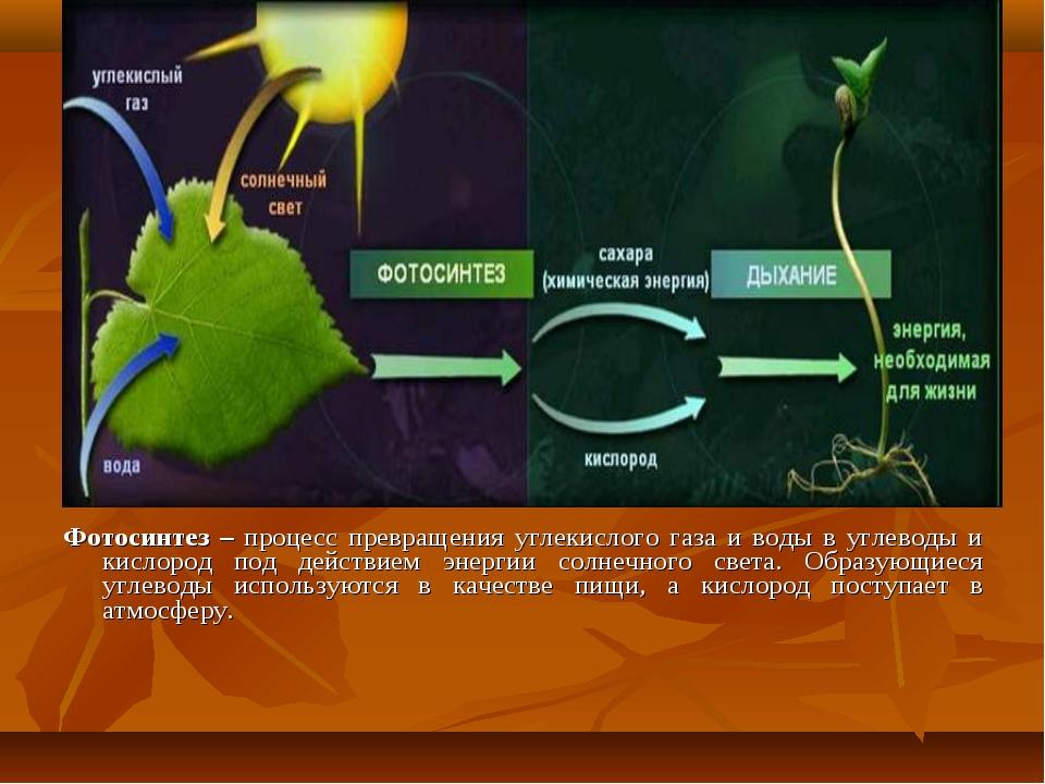 Фотосинтез – процесс превращения углекислого газа и воды в углеводы и кислоро...