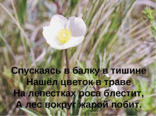 Спускаясь в балку в тишине Нашёл цветок в траве На лепестках роса блестит, А