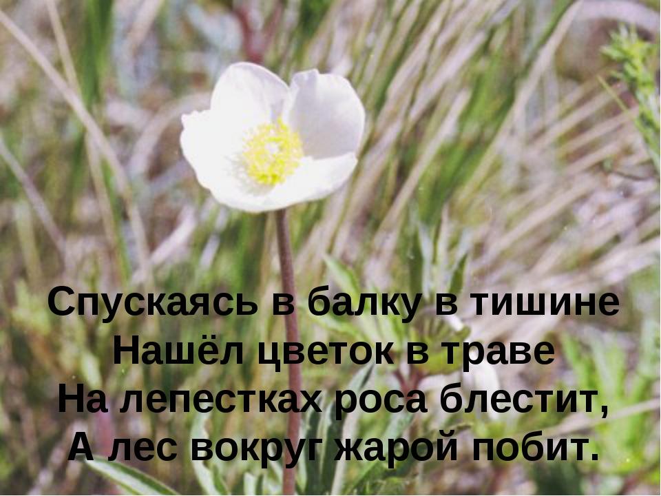 Спускаясь в балку в тишине Нашёл цветок в траве На лепестках роса блестит, А...