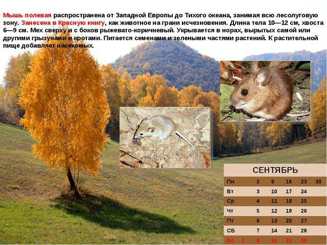Мышь полевая распространена от Западной Европы до Тихого океана, занимая всю...