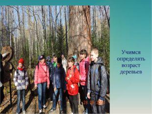 Учимся определять возраст деревьев
