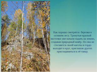Как хорошо смотрятся березки в осеннем лесу. Тронутые краской листочки уже на