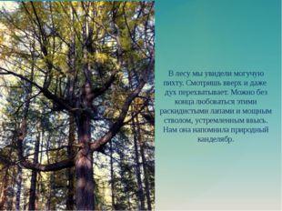 В лесу мы увидели могучую пихту. Смотришь вверх и даже дух перехватывает. Мож
