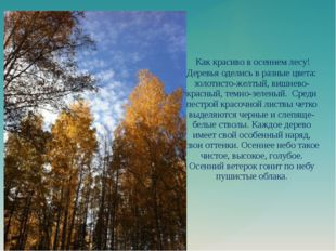 Как красиво в осеннем лесу! Деревья оделись в разные цвета: золотисто-желтый