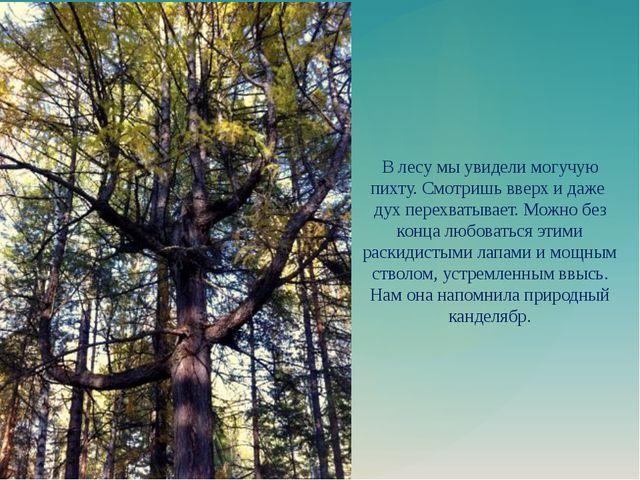 В лесу мы увидели могучую пихту. Смотришь вверх и даже дух перехватывает. Мож...