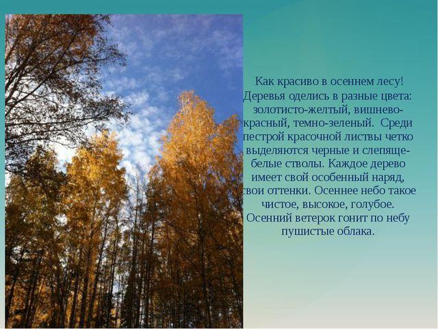 Как красиво в осеннем лесу! Деревья оделись в разные цвета: золотисто-желтый...