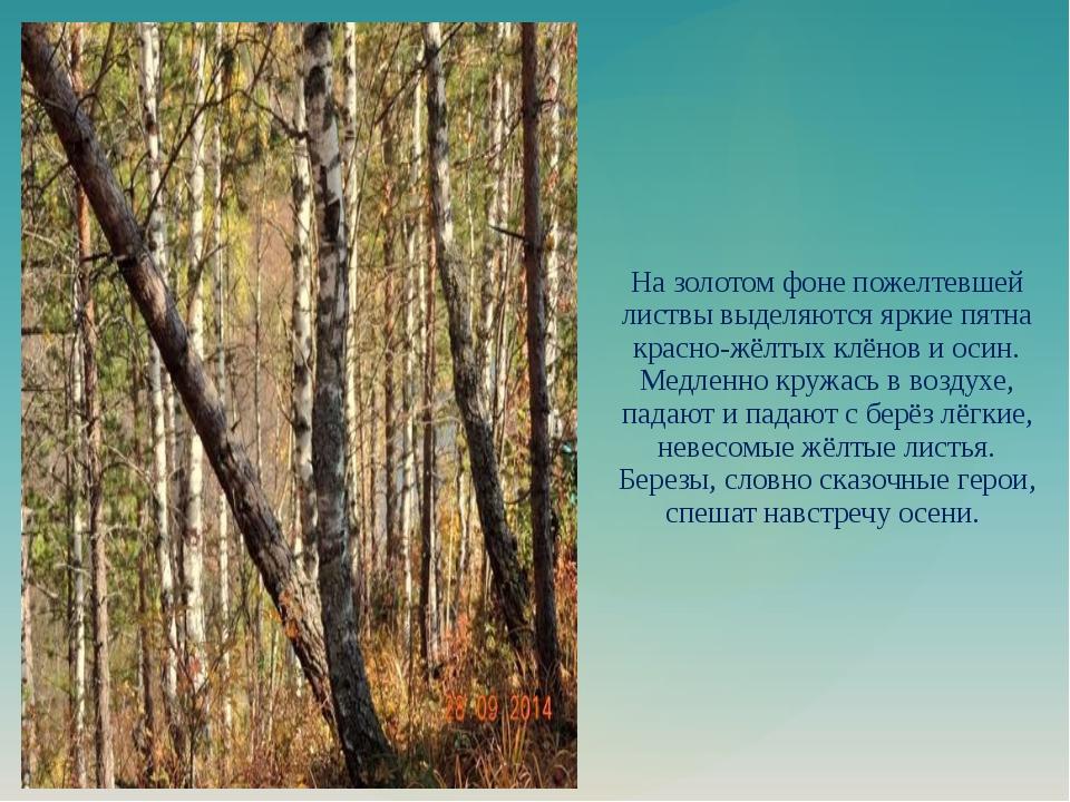 На золотом фоне пожелтевшей листвы выделяются яркие пятна красно-жёлтых клёно...