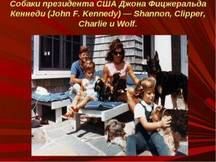 Собаки президента США Джона Фицжеральда Кеннеди (John F. Kennedy) — Shannon,