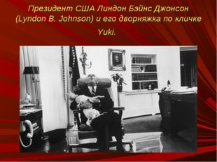 Президент США Линдон Бэйнс Джонсон (Lyndon B. Johnson) и его дворняжка по кли