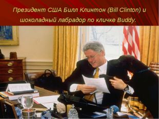 Президент США Билл Клинтон (Bill Clinton) и шоколадный лабрадор по кличке Bud