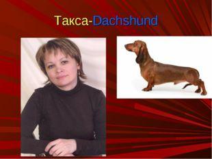 Такса-Dachshund