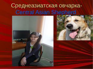 Среднеазиатская овчарка-Central Asian Shepherd
