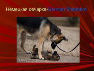 Немецкая овчарка-German Shepherd