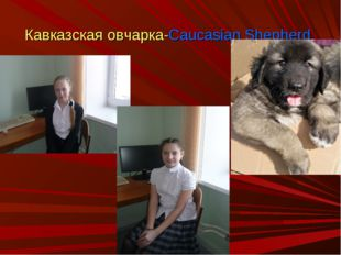 Кавказская овчарка-Caucasian Shepherd