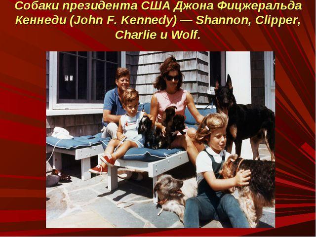 Собаки президента США Джона Фицжеральда Кеннеди (John F. Kennedy) — Shannon,...