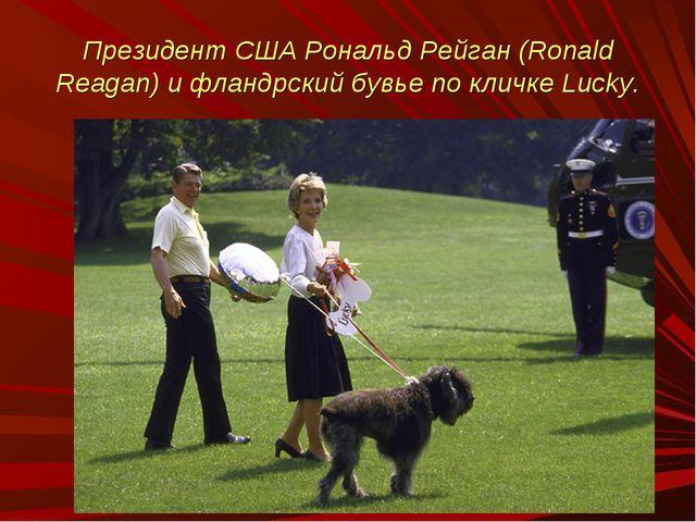 Президент США Рональд Рейган (Ronald Reagan) и фландрский бувье по кличке Luc...