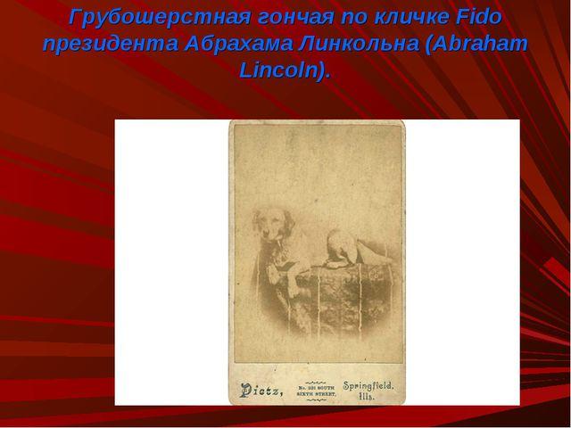 Грубошерстная гончая по кличке Fido президента Абрахама Линкольна (Abraham Li...