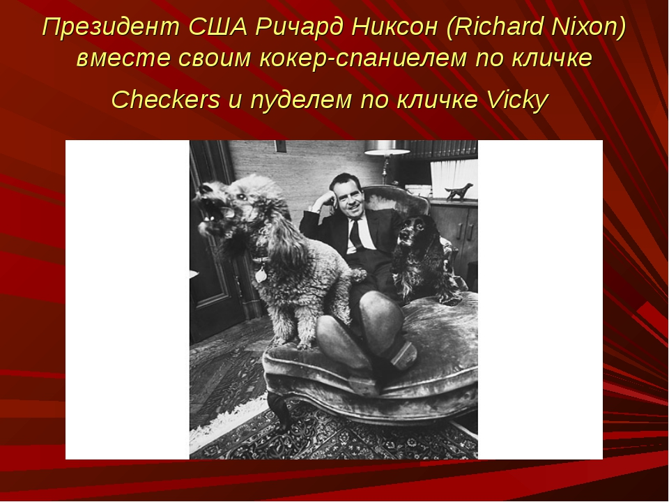 Президент США Ричард Никсон (Richard Nixon) вместе своим кокер-спаниелем по к...