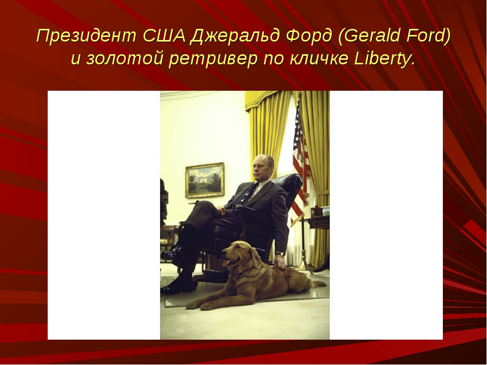 Президент США Джеральд Форд (Gerald Ford) и золотой ретривер по кличке Liberty.