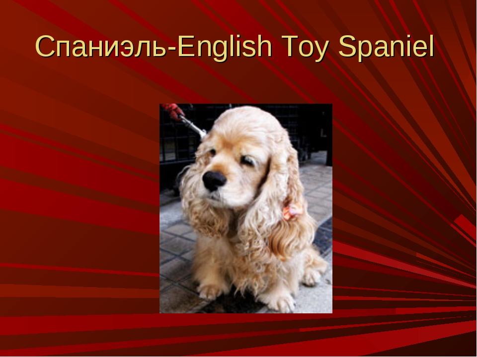 Спаниэль-English Toy Spaniel