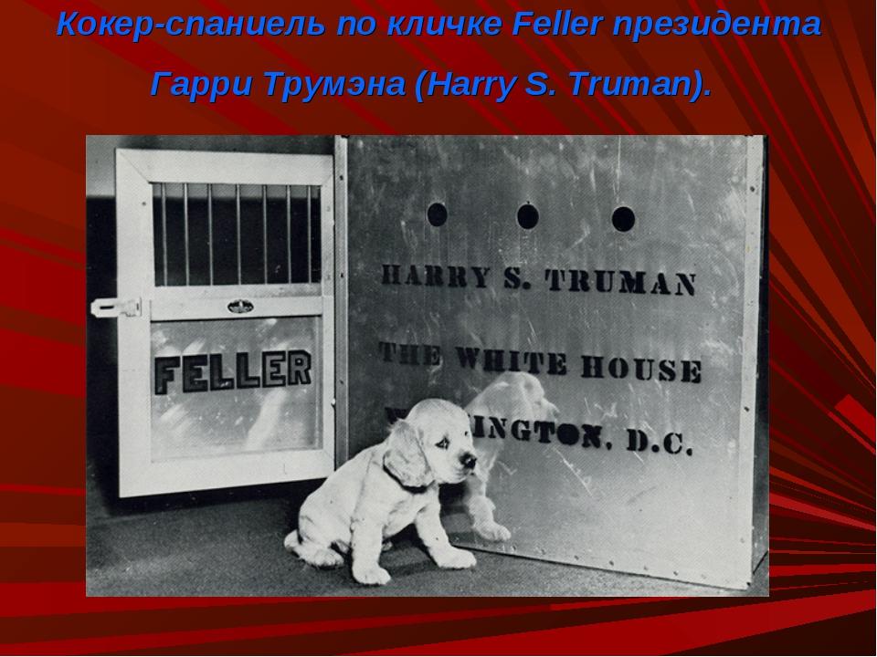 Кокер-спаниель по кличке Feller президента Гарри Трумэна (Harry S. Truman).