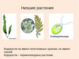 Низшие растения Водоросли не имеют вегетативных органов, не имеют тканей. Вод