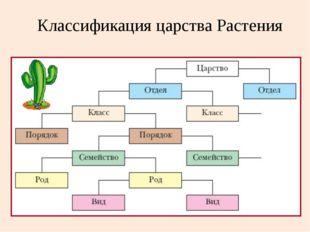 Классификация царства Растения