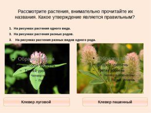 Рассмотрите растения, внимательно прочитайте их названия. Какое утверждение я