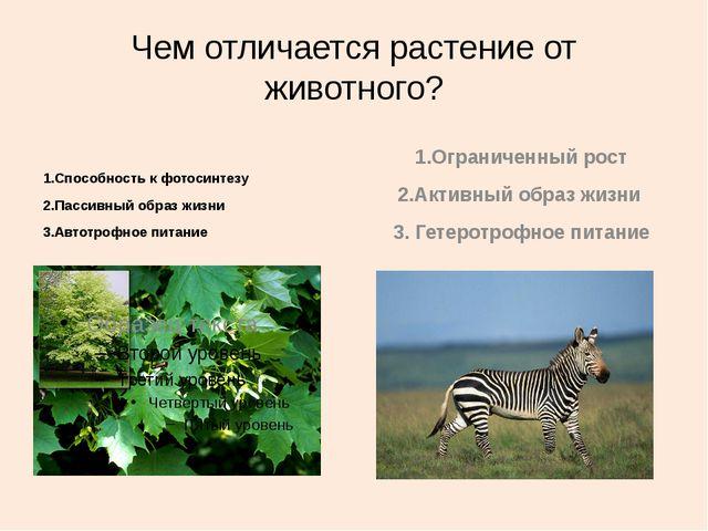 Чем отличается растение от животного? 1.Способность к фотосинтезу 2.Пассивный...