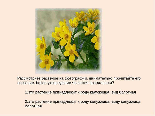 Рассмотрите растение на фотографии, внимательно прочитайте его название. Како...