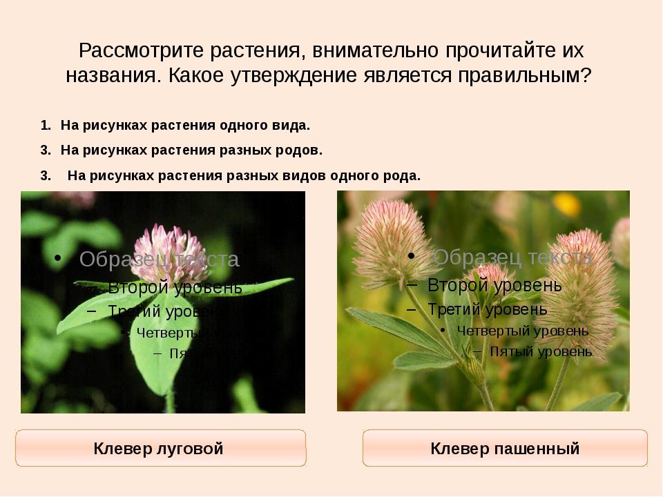 Рассмотрите растения, внимательно прочитайте их названия. Какое утверждение я...