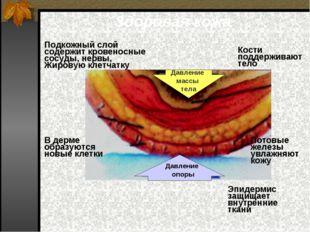 Здоровая кожа Давление массы тела Давление опоры Кости поддерживают тело Под