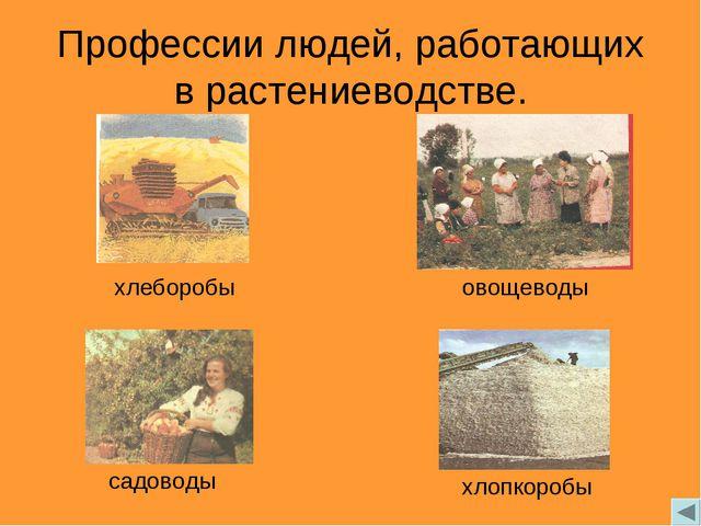 Профессии людей, работающих в растениеводстве. хлеборобы овощеводы садоводы х...
