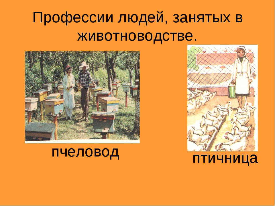 Профессии людей, занятых в животноводстве. пчеловод птичница