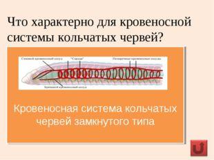 Что характерно для кровеносной системы кольчатых червей? Кровеносная система