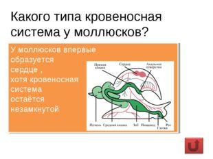 Какого типа кровеносная система у моллюсков? У моллюсков впервые образуется с