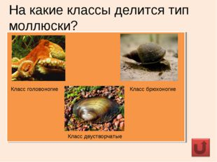 На какие классы делится тип моллюски? Класс головоногие Класс брюхоногие Клас