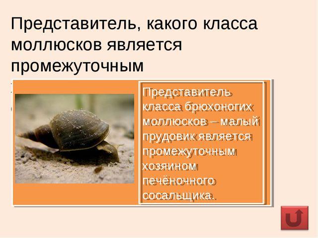 Представитель, какого класса моллюсков является промежуточным хозяином печёно...
