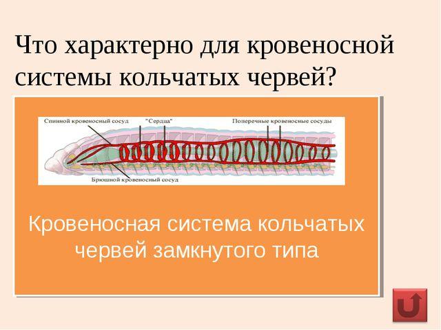 Что характерно для кровеносной системы кольчатых червей? Кровеносная система...