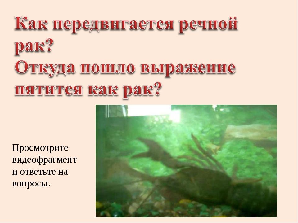 Просмотрите видеофрагмент и ответьте на вопросы.