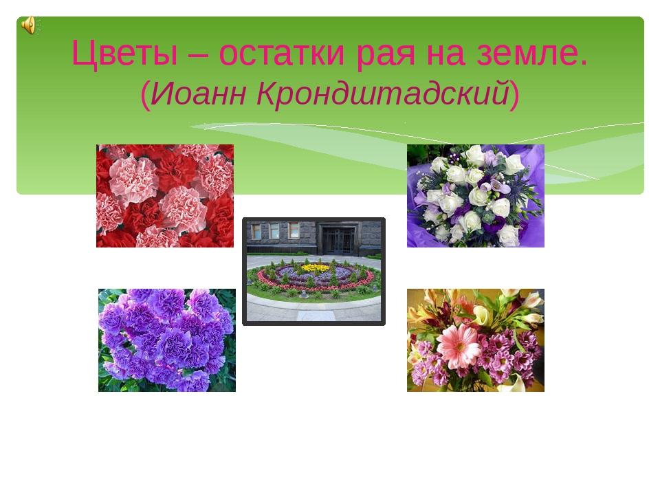 Цветы – остатки рая на земле. (Иоанн Крондштадский)