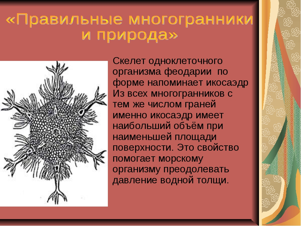 Скелет одноклеточного организма феодарии по форме напоминает икосаэдр Из все...