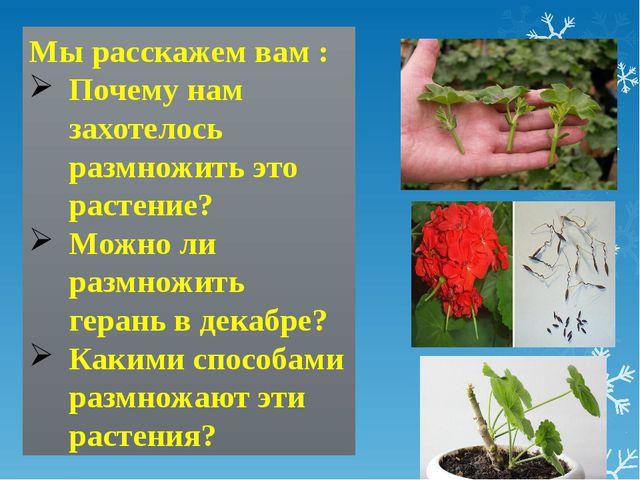 Мы расскажем вам : Почему нам захотелось размножить это растение? Можно ли ра...