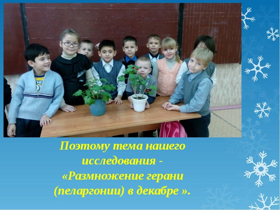 Мы узнали из энциклопедии, что пеларгония размножается черенками и семенами....