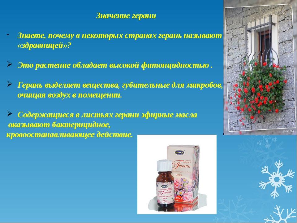 Значение герани Знаете, почему в некоторых странах герань называют «здравнице...