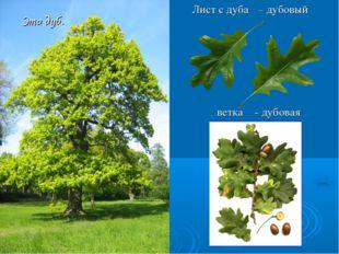 Это дуб. Лист с дуба ветка – дубовый - дубовая