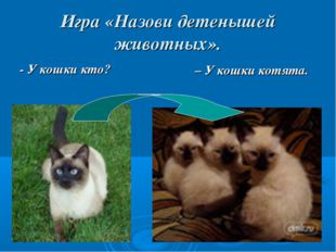 Игра «Назови детенышей животных». - У кошки кто? – У кошки котята.