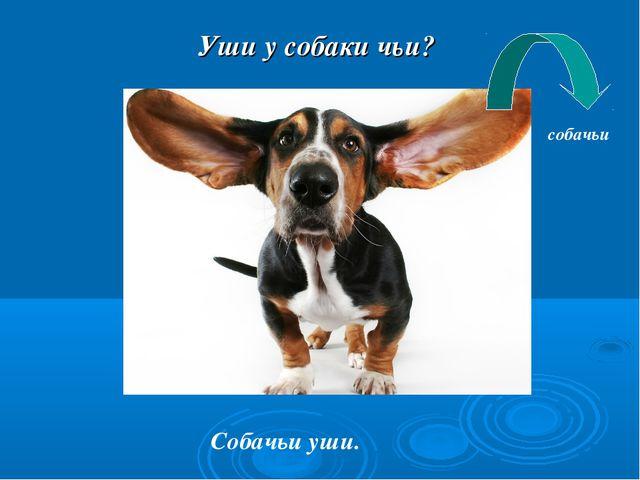Уши у собаки чьи? Собачьи уши. собачьи
