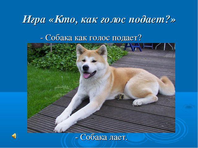 Игра «Кто, как голос подает?» - Собака как голос подает? - Собака лает.