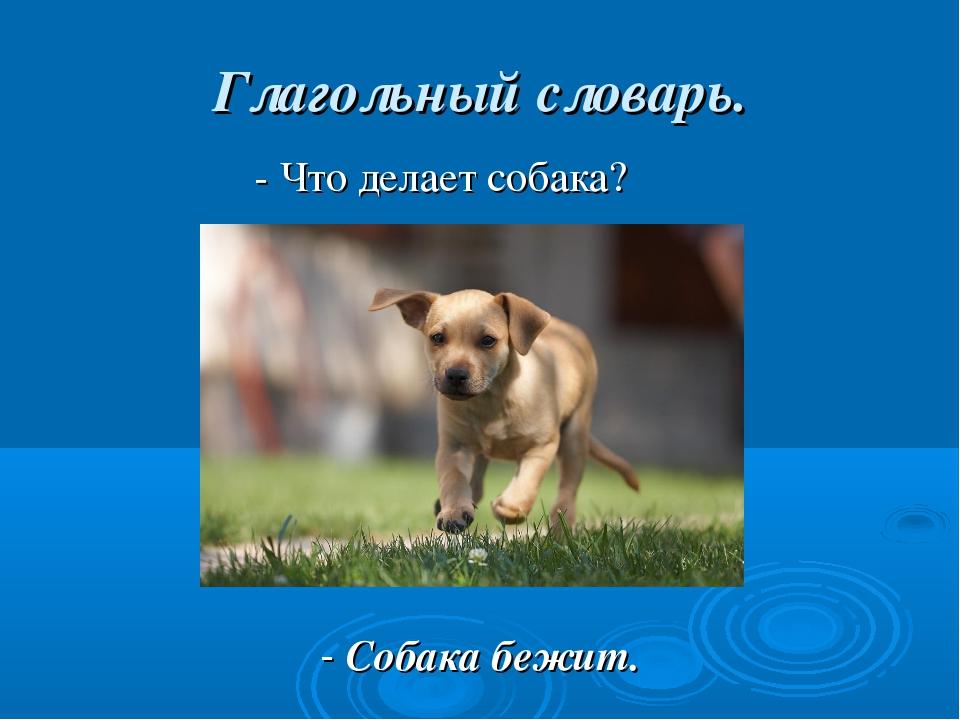 Глагольный словарь. - Что делает собака? - Собака бежит.